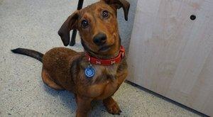 A hét cukisága! Ez a tündéri kutyus süket, de megtanult máshogy kommunikálni - videó