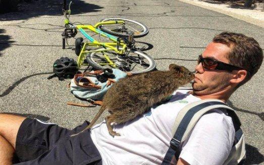 Megörült a biciklisnek, dobott egy hollywoodi mosolyt a kenguru
