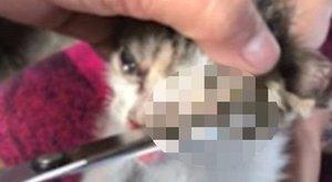 Vérlázító állatkínzás: bevarrták a kiscica szemeit, füleit és orrát is - videó