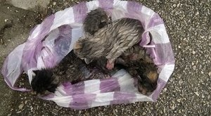 Vérlázító! Nejlonzacskóban várták a halált az újszülött cicák