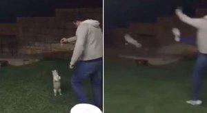 Étellel kecsegtette a macskát, de aztán undorító, amit végül vele tett – videó