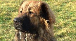 Döbbenet: hangoskodott a gyerek, kutyát eresztett rá az asszony
