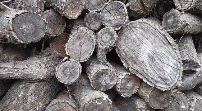 Halálos baleset: fadaráló gépbe esett egy férfi Szolnokon