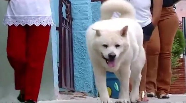 Naponta megsétáltatja magát az árván maradt kutya