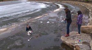 Gondolkodás nélkül ugrott kutyája utána jeges tóba