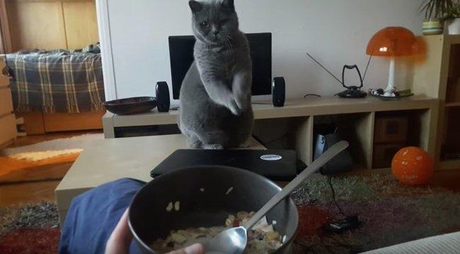 Ez a magyar cica úgy rimánkodik, mint senki - videó