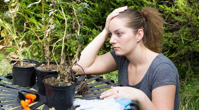 Tönkretette a növényeket az áprilisi tél
