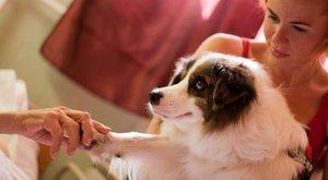A betegek utolsó napjait teszi szebbé Zoya kutya