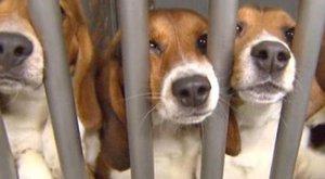 A laboratóriumi állatok száma a világon évente eléri a 100 milliót