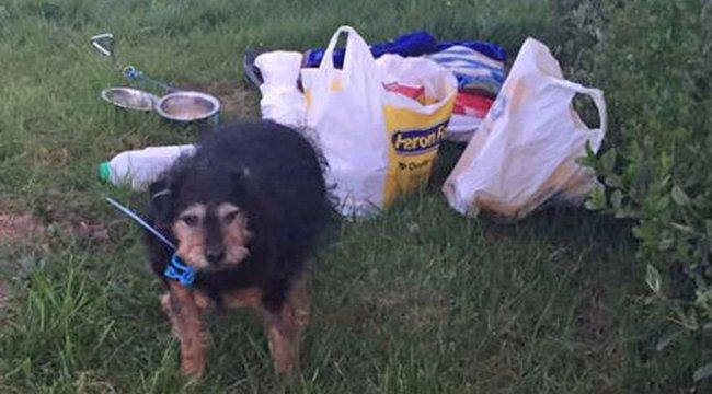 Szívtelen szomszéd: a nyakára kötött egy üzenetet, majd kidobta a rábízott kutyát