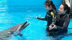 Végre: négy év múlva a delfinekkel is dumálhatunk