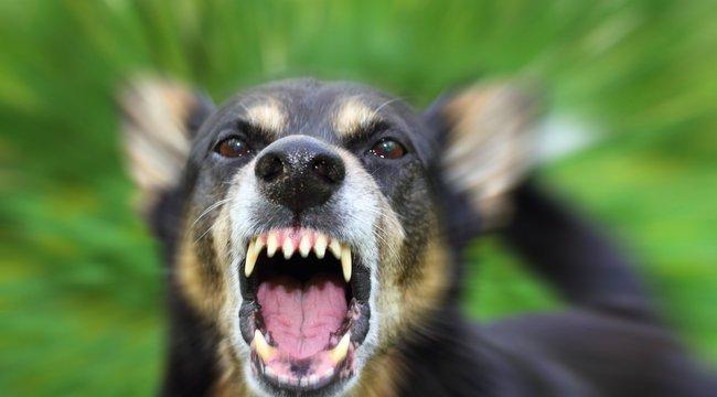 Megkattant a kutya, kivégeztejótevőjét