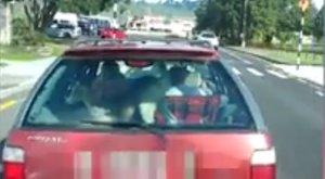 Senki sem érti, mit keresett a kecske a hátsó ülésen, de a sofőr kapcsán is merülnek fel kérdések