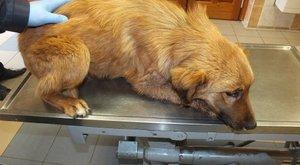 Nyakon szúrta kutyáját, mert túl hangosnak találta