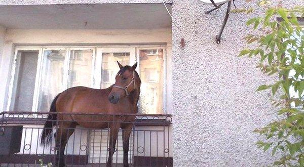 Halló, tűzoltók? Leesett az erkélyről egy vak ló