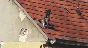 Kegyetlen: padlásra zárva éheztették a kutyát