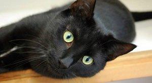 Milliomossá tettékgazdáikat a macskák