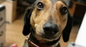 Látta már, hogyan néz ki egy kutya feje tüsszögéskor? – fotók