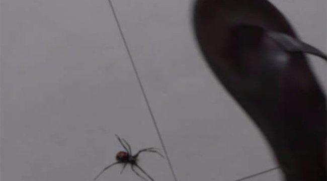 Horror videó: még egy ok, hogy miért ne csapjon agyon egy pókot sem