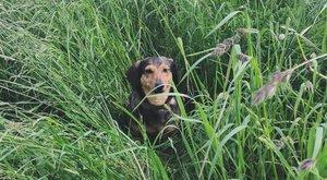 Találd meg Tubit, a Bors kutyáját! fotó
