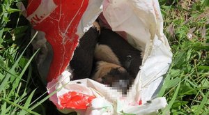 Négy kiskutya halt meg – elfogták a rendőrök az állatkínzót –fotók