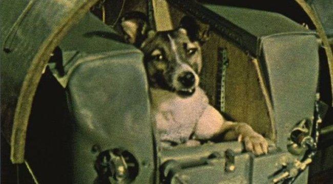 Lajka kutya és sorstársai: az első állatok az űrben