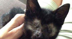 Ki fogadja be a szem nélküli Sammy cicát?