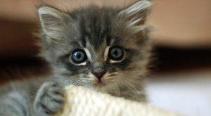 Így kell macskát lopni: táskába gyűrte, majd kisétált a boltból