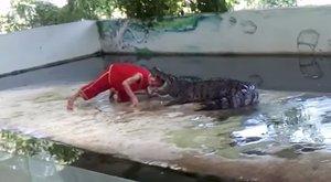 A krokodil megunta a mutatvány, majdnemleharapta a gondozója fejét