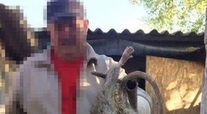 Kutya méretű patkányt fogtak Hódmezővásárhelyen - fotó