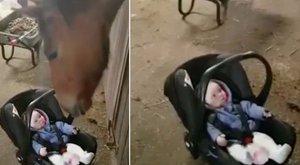 Hihetetlen cukiság! Ló ringatta el a síró kisbabát