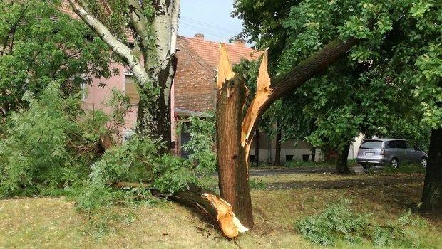 Szupercella csapott le Szegedre - fák dőltek, ágak szakadtak a viharban
