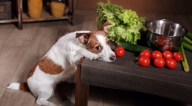 Állatkínzás vagy jótett zöldségen tartani a kutyát?