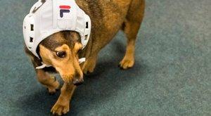 Jós-kutyaként debütál a vizes-vb kapcsán Tubi