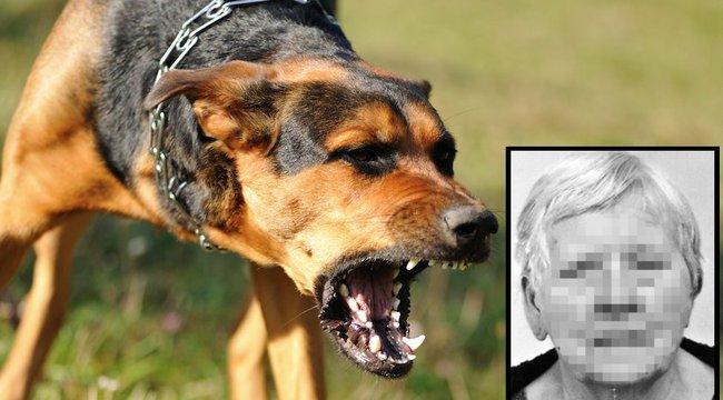 Kóbor kutya marta szét az eltűnt asszony holttestét