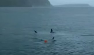 Versenyt úszott egy nagy fehér cápával Michael Phelps, ez lett a vége