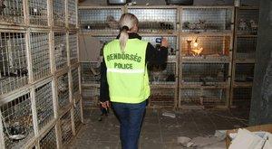 A brutális állatkínzás országa lettünk – a hírnévért ölnek