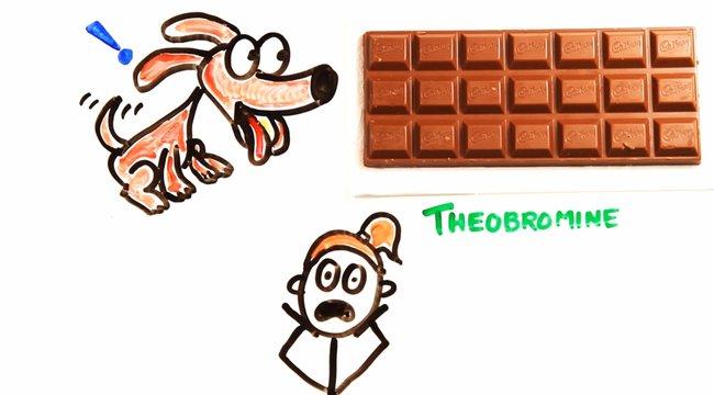 Extrém adagok:Biztos halálhoz vezet, ha sok csokoládét eszünk
