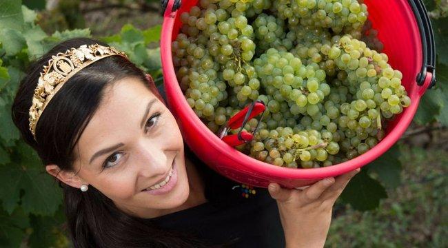 Nem csak bor készíthető a szőlőből