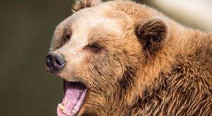 Bemászott egy medvéhez a részeg férfi, hogy megitassa, nem lett jó vége – videó