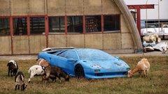 Kecskék legelnek az elhagyott Lamborghini mellettMajosházán