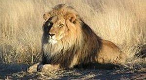 Horror a cirkuszban! Elkapta az oroszlán az idomárt