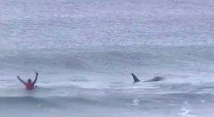 Azt hitték a szörfösök, csak a hideg vízzelkell megküzdeniük. Tévedtek – videó