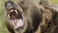 Ikertestvére szeme láttára végzett a hatévessel egy medve