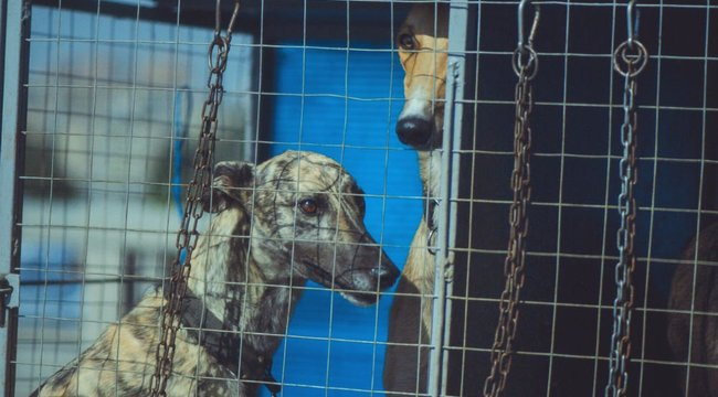 Halálra éheztette agarait a borsodi állatvédő