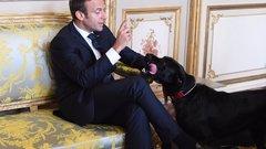 Macron kutyája a kandallóba pisilt