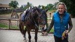 Megvadult lova támadt Sasvári Sándorra