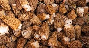 Gasztro Magazin: Az ízletes kucsmagomba