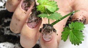 Nincs kertje? Ültessen növényeket a körme alatt ragadt koszba!