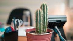 Két hét után sem vette észre, hogy nem kaktuszt nevelgeta cserépben